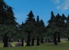 The Jaggedpine Forest